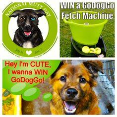 197 best godoggo fetch machine i automatic ball launcher thrower for