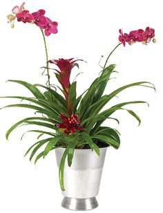 NEW! Imperial Tropical Orchid Garden - $109.95