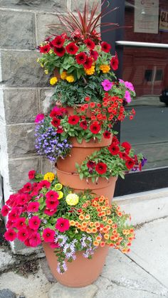 Best tips for how to care geraniums in winter to stay beautiful Geraniums in winter need special care because these flowers come in rest until next spring. Geraniums are spectacular flowers that bl… Container Flowers, Flower Planters, Container Plants, Container Gardening, Flower Pots, Succulent Containers, Vegetable Gardening, Beautiful Flowers Garden, Pretty Flowers