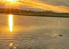 Passing the torch of life to the next generation __ Today's walk: 3.24 mi.; total since 3/30/14: 5190.36 miles.  #sunset #goldenhour #spring #reflections #goldensunset #love #photooftheday #beautiful #walking #suburbanexpedition #motherhood #glowing #relax #landscapelovers #ducks #nature #walk10000miles #fitnesswalking #walks #goldenpond #earth_reflect #ig_world_photo #landscapephotography #ShotOniPhone7Plus #master_gallery #water #lakes #wonderful_places  #ig_world_photo #sunset_stream