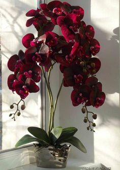 My Picture Heaven: Photo Rare Flowers, Exotic Flowers, Amazing Flowers, Beautiful Flowers, Purple Flowers, Tropical Flower Arrangements, Orchid Arrangements, Beautiful Flower Arrangements, Red Orchids