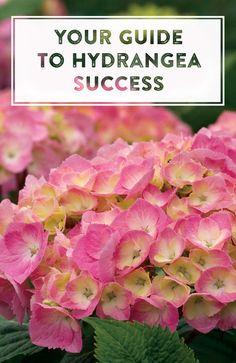 87 Best Hydrangea Gardens Images Hydrangea Garden Hydrangea