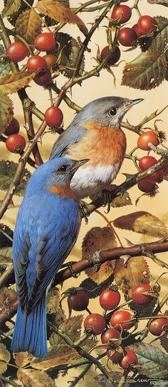 ''Bluebirds by Carl Brenders...we have bluebirds nesting on our fence where my hubby built bluebird boxes. I love watching them with their babies.''