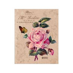 Flower Garden VI Rose - Flower Artwork - Floral Art Print - 8x10 Print - French Country Style - Cottage Chic Style Decor
