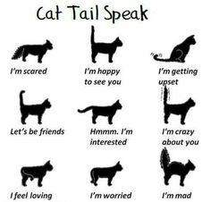 These are accurate and differ from dog tail speak. Cat communication is usually subtle (unless theyre ripping off your face or running up your leg - lol). http://#lolcats http://#lol http://#lulz http://#lmao http://#funny http://#humor http://#cats http://#kittens http://#animals http://#kitten http://#meme http://#memebase http://#grumpy cat http://#cat shaming http://#lolcat http://#cute http://#aw http://#weheartit http://#kitty http://#love http://#beauty http://#sweet http://#zoo…