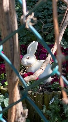 stay up to date with news from vienna 🌱 Hotel Winzer, Stay Up, Vienna, News, Animals, Radio Advertising, Messages, Animales, Animaux