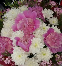 Pink peonies in summer
