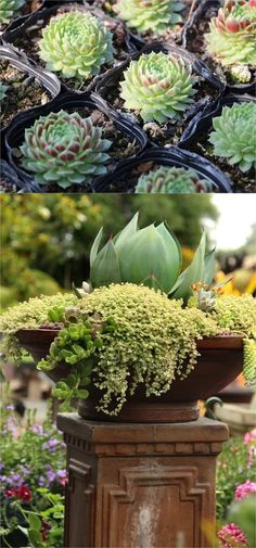 How to create a drop-dead-gorgeous succulent garden in 5 easy steps: with detailed succulent care tips and succulent container garden design secrets. https://www.apieceofrainbow.com/plant-beautiful-succulent-gardens/