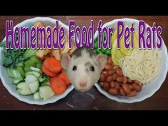 How to Make Homemade Rat Food | Rattiepedia: Episode 13 - YouTube