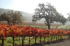 September 28, 2013 - Crush Harvest Party at Kenwood Vineyards. Wine sampling, vineyard tour, special wine discounts, BBQ and music! #sonomacountyharvest2013 #sonomacounty #sonomaevents