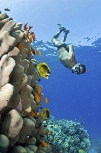 St Maarten Shore Excursion: Sand Dollar Half Day Snorkel Trip #caribbeancruises #stmaarten