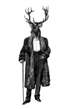Dan Hillier stag man. Have this, love this.