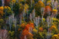 ***Autumn hillside (no location given) by Zsolt Andras Szabo on 500px