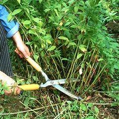 12 Creative Gardening Ideas You're Going To Love Garden News, Garden Tools, Plantation, Green Life, Garden Planning, Horticulture, Planting Flowers, Outdoor Power Equipment, Winter