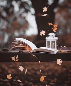 Travel Discover Aesthetic Pictures - Fushion News Autumn Photography Book Photography Creative Photography Amazing Photography Aesthetic Photography Nature Photography Lighting Photography Backdrops Photography Captions Photography Hashtags Autumn Photography, Book Photography, Creative Photography, Amazing Photography, Photography Lighting, Photography Captions, Photography Backdrops, Aesthetic Photography Nature, Photography Hashtags