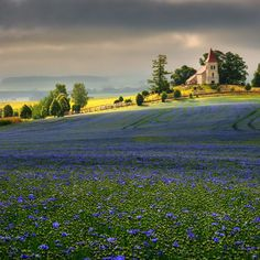 Field of flax is in my country peculiarity.  Slovakia Slovensko