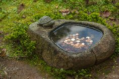 Turtle Coin Pond - I Shot this little turtle coin pond in the Japanese Garden at…