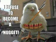 Attack Of The Funny Animals – 48 Pics. I'm not chicken nugget from McDonalds. Cute Chick