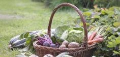 Gardeners living in Florida can grow vegetables year-round.