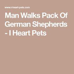 Man Walks Pack Of German Shepherds - I Heart Pets