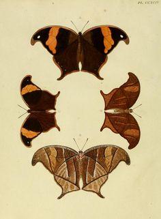 d. 4 (1782) - Aanhangsel van het werk, De uitlandsche kapellen : - Biodiversity Heritage Library