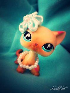 #ladycat #kissalps #shorthair #Стоячка