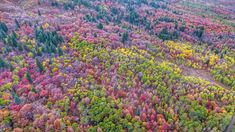 Logan Canyon transforms into hues of red, purple, yellow and so much more. Our World, Purple Yellow, Mother Nature, Logan, Utah, Tourism, Fall, Autumn, Plants