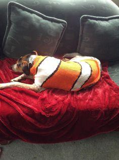 Lulu has found Nemo