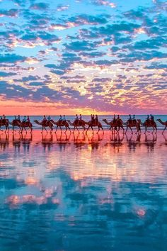 Camels in a colorful setting