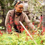 Growing Everything but Gardeners   Ena K. McPherson