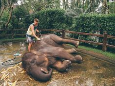 MASON ELEPHANT SANCTUARY BALI, INDONESIA - Jonny Melon Bali Elephant, Elephant Park, Elephant Ride, Ubud, Bali Honeymoon, Honeymoon Destinations, Honeymoon Travels, Places To Travel, Places To Visit