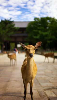 Nara Park (奈良公園) - free park where deer run wild! They're friendly and you can buy deer crackers to feed them. Very unique, also reachable by train from Kyoto/Osaka