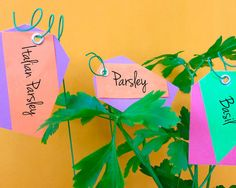 Garden Plant Tags
