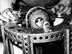 Albert II antes de dar su vida para el avance de la exploracion del espacio (NASA).
