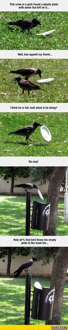 Funny pictures about This Crow Is Better Than Most People. Oh, and cool pics about This Crow Is Better Than Most People. Also, This Crow Is Better Than Most People photos. Animals And Pets, Funny Animals, Cute Animals, Smart Animals, Funny Birds, Nature Animals, Wild Animals, Baby Animals, Beautiful Creatures