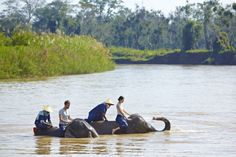 Elephant Bath Time, Anantara Golden Triangle, Chiang Saen, Chiang Rai, Thailand.