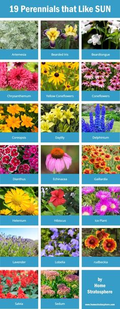 19 perennials that like the sun. This is just the tip of the iceberg. Click through to see many more. #flowers #gardening #perennials Design your own garden: https://www.homestratosphere.com/goto/plan-a-garden/ #FlowerGarden