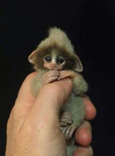 This monkey is so small, you can wrap it around your thumb!