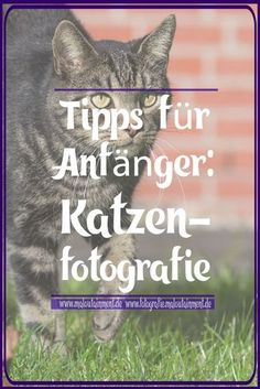 Tipps für Anfänger: Katzenfotografie – Maloutainment   Hilfe , Anleitungen & Ideen für Fotografie , DIY & Rezepte   Blog   #fotografie #katzen #anfänger