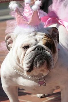 You KNOW I will dress up my bully...(when I get one)