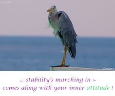 ... #stability's marching in ~ comes along with your inner #attitude !