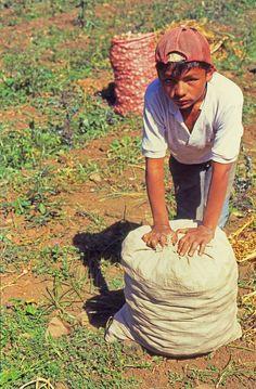 Niño colector de ajos de Santo Domingo, Merida, Venezuela