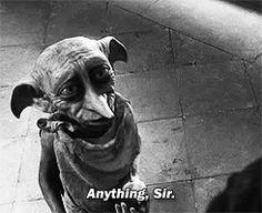 What % Dobby Are You? I got 100% Dobby!