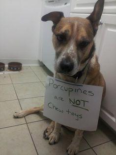 """Dog Shaming"" website, too cute. lol"