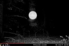 Misteriosa Bola de Luz (Ufo Orb) Gravada por uma Câmera de Vigilância