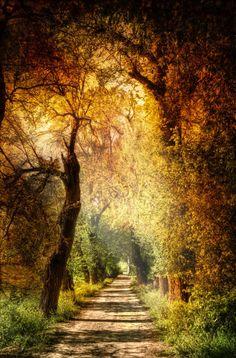 Mystic path // Sendero mistico (Andalusia, Spain) by Zu Sanchez