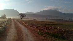 The sun rises and the mist drifts away. Out walking the dog on a December morning in Spain.