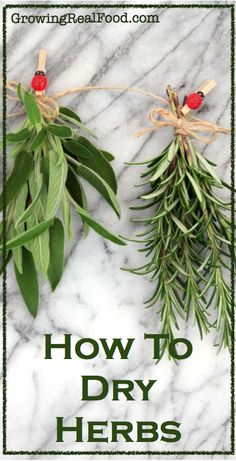 How To Dry Herbs | GrowingRealFood.com ---- Love the little lady bug clips