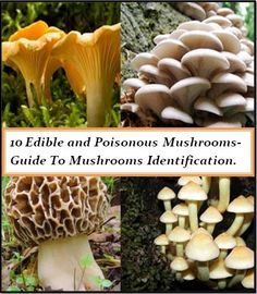 10 edible and poisonous mushrooms and a guide to identifying mushrooms.