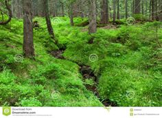 http://thumbs.dreamstime.com/z/summer-forest-20960021.jpg